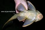 www.aqua-media.de